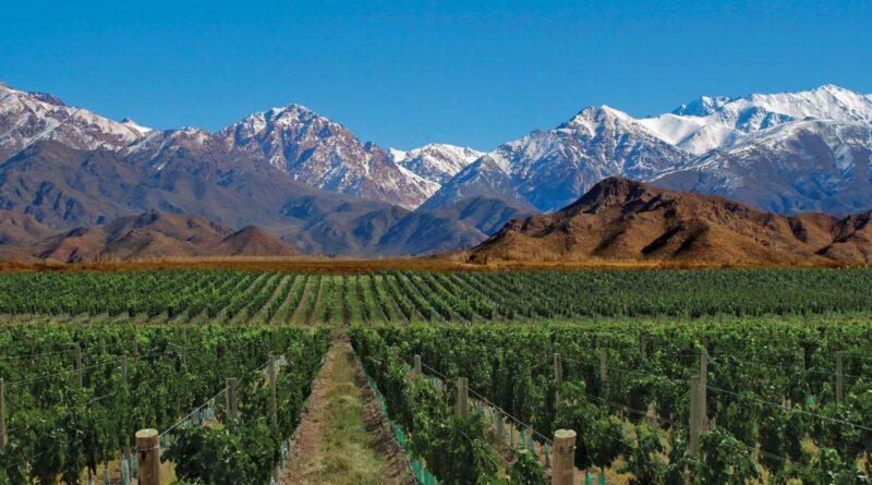 malbec grape Mendoza