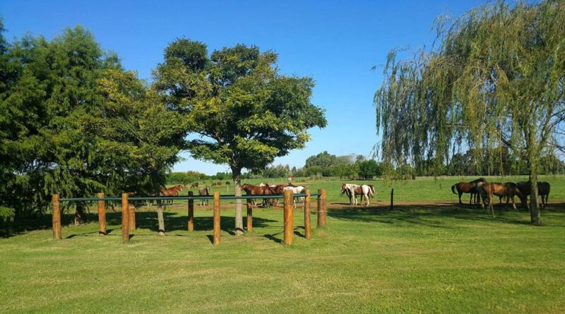 Argentine estancia with horses